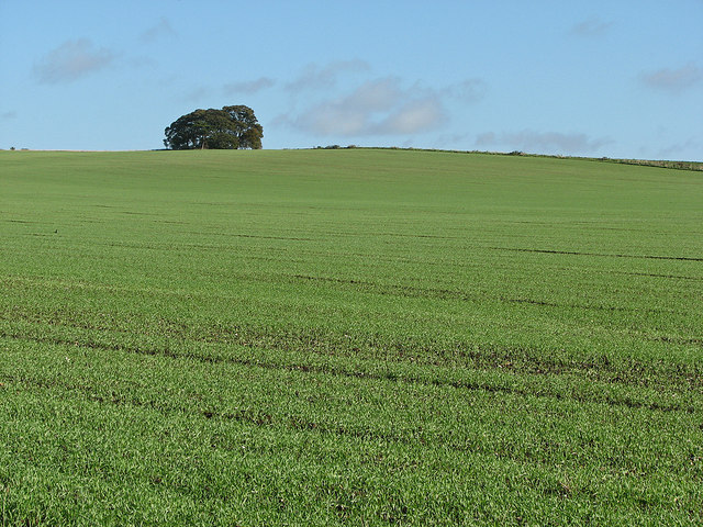 Big fields in autumn