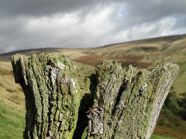 Top of a weathered gatepost near Shireoaks