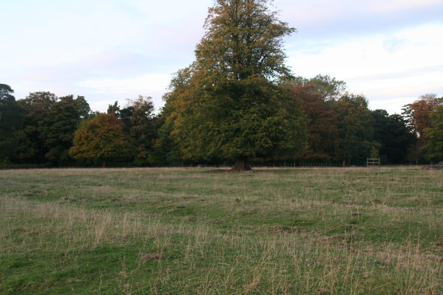 Ridge and furrow in Grainsby Park