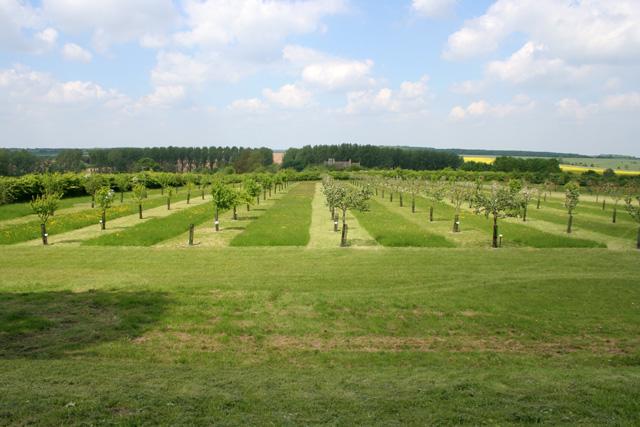 Orchard, Lyveden New Bield
