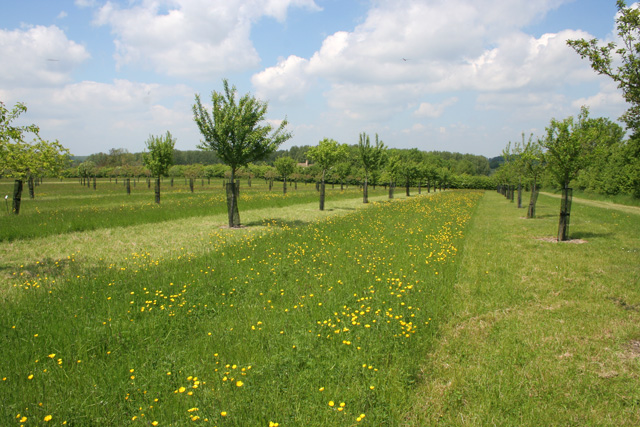 Orchard at Lyveden New Bield