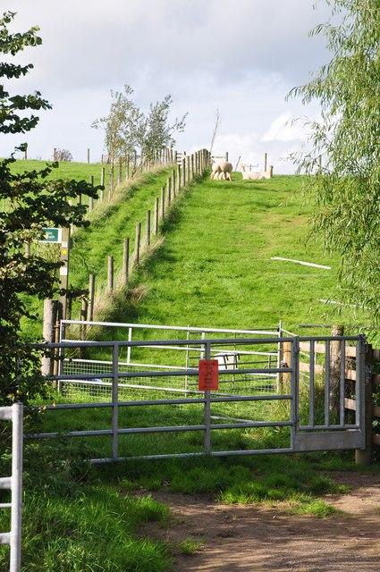 Ashill : Grassy Field