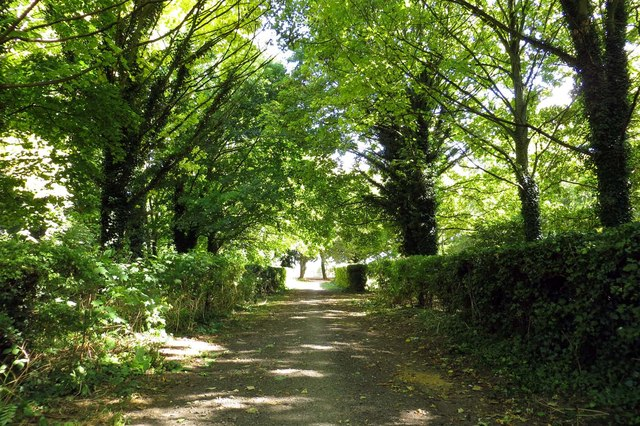 The Icknield Way runs under the trees