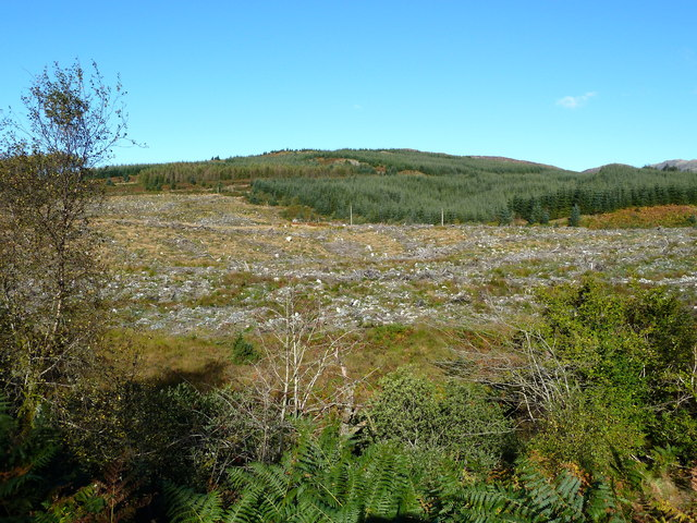 Clear felled area of forestry near Benera