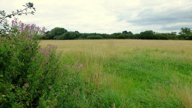 Pasture land near Hatton