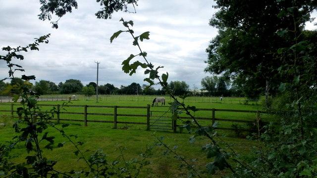 Footpath through paddocks