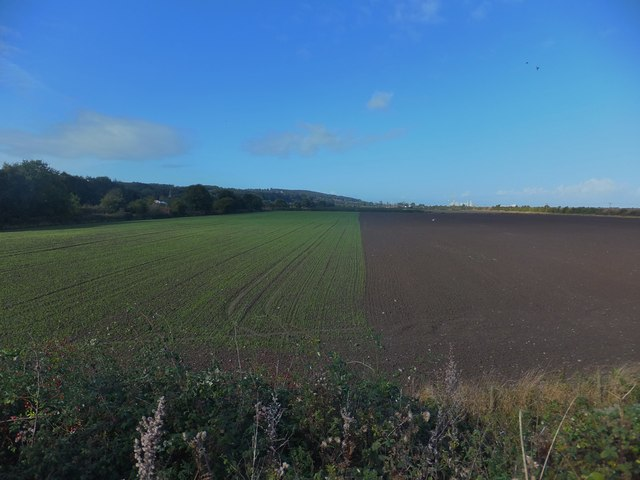 And on left a green field, whilst on the right a brown field