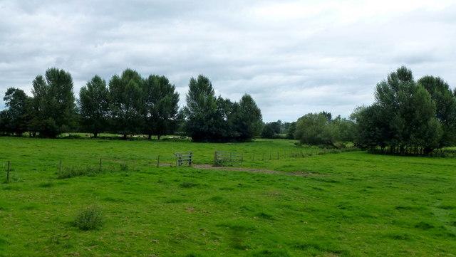 Meadows by Longford Brook