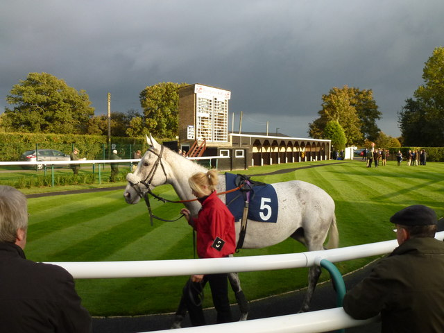 Grey horse and grey sky - Huntingdon racecourse