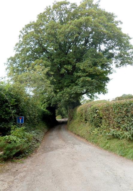 Lane to Llan Farm, Dorstone