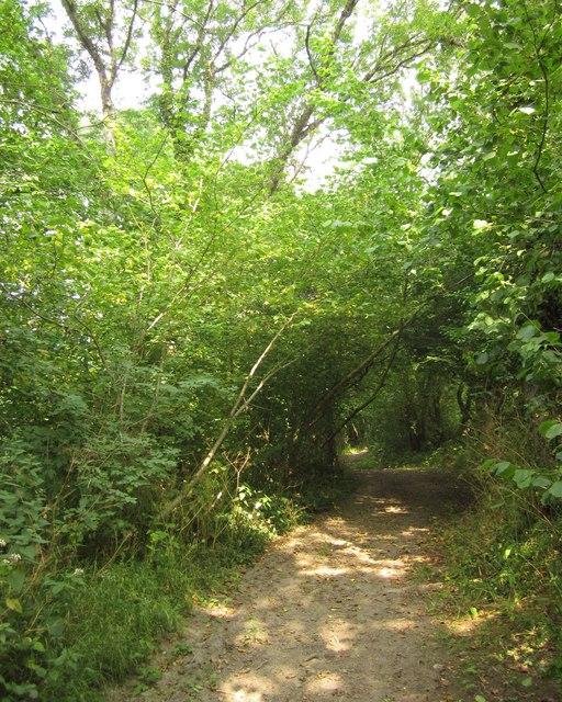 Tarka Trail near Eastacombe