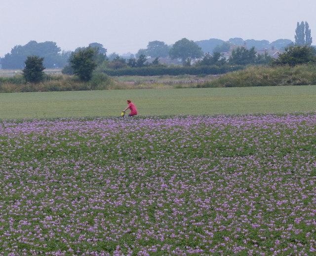 Cycling across the farmland
