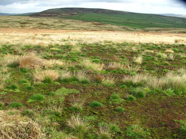 Not so boring grassland