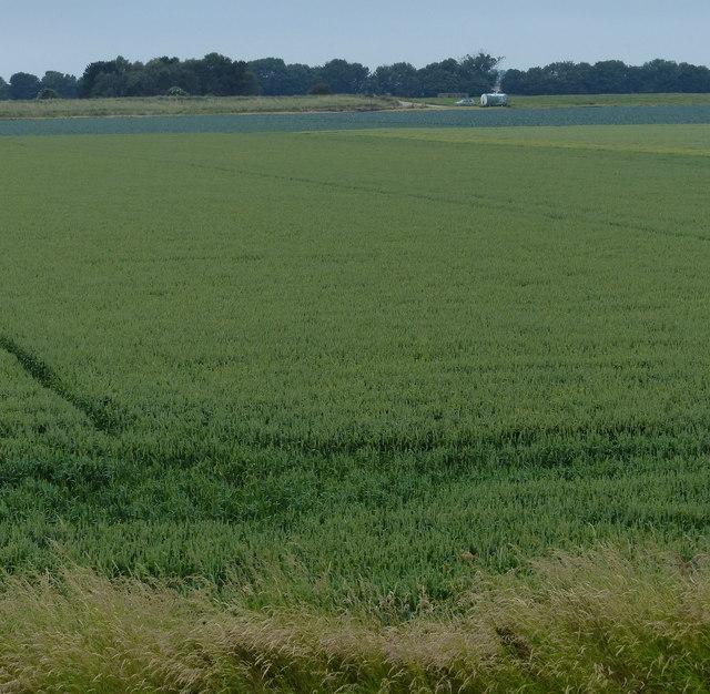 Farmland behind the sea bank