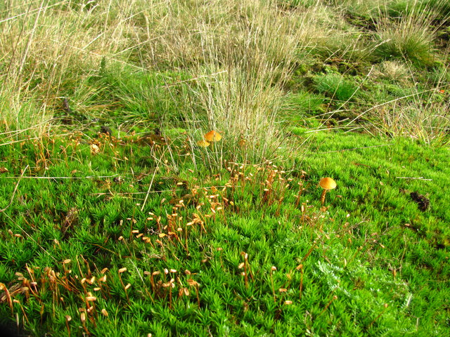 New growth improving the moor