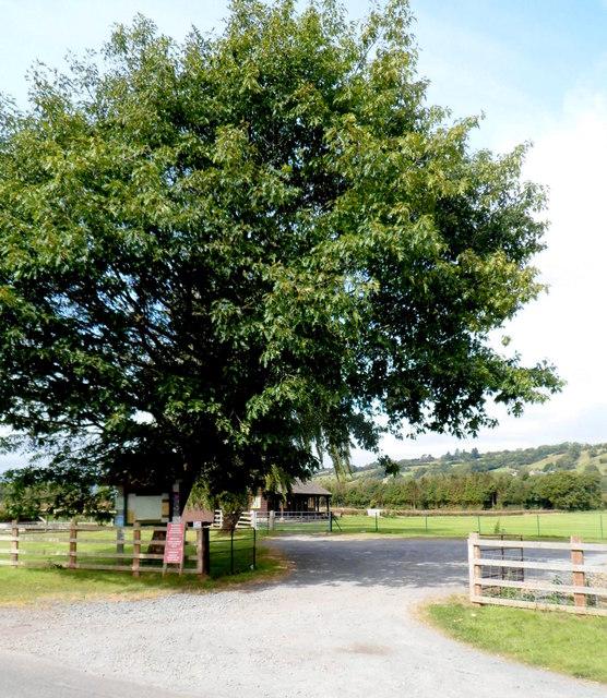 Tree dominates entrance to Dorstone Playing Field