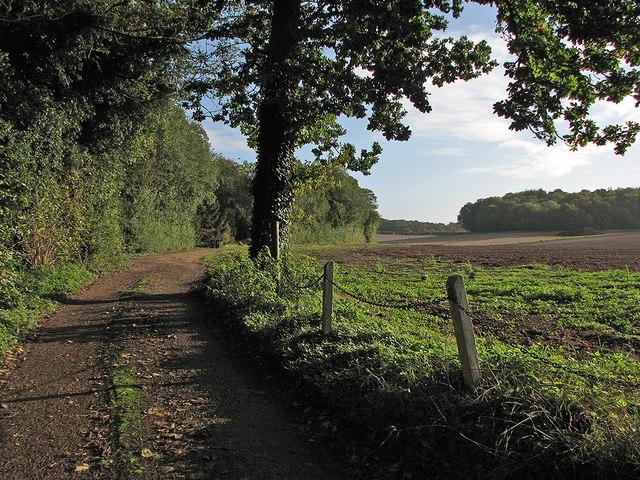 Farm track and plantations