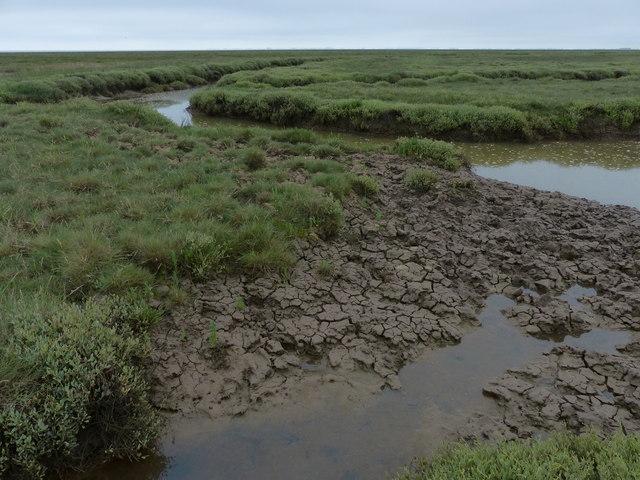 Salt marsh and tidal creek