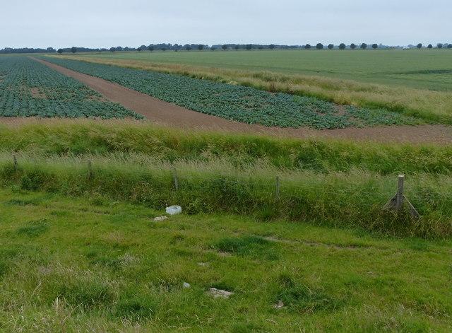 The flat farmland behind the sea bank
