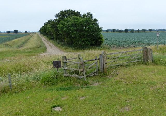 Farm track and row of trees
