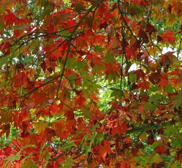 Westonbirt arboretum colours 2013