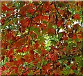 ST8589 : Westonbirt arboretum colours 2013 : Week 42