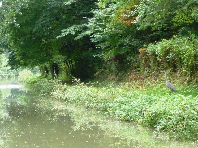 Heron on the Kennet & Avon towpath