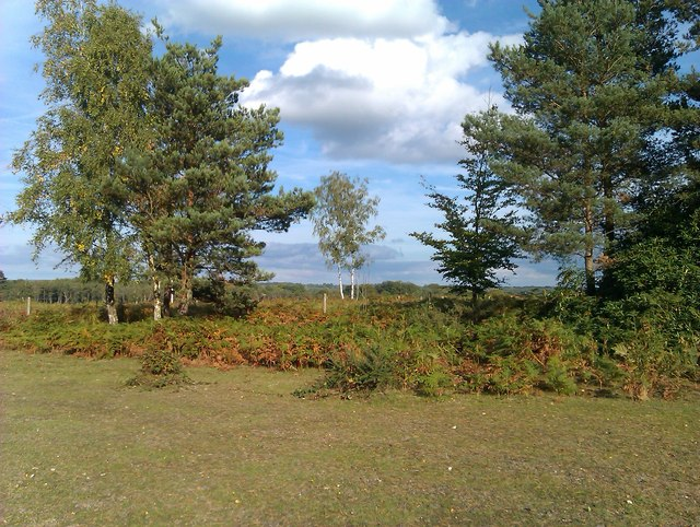 Edge of Foxbury Plantation