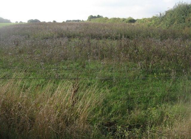 Field margin of wildflowers