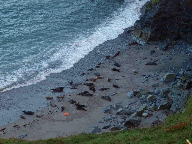 Godrevy Point seals