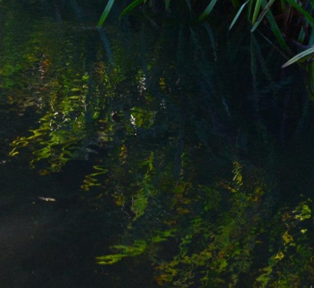 Reflections in the River Pang, near Tidmarsh, Berkshire