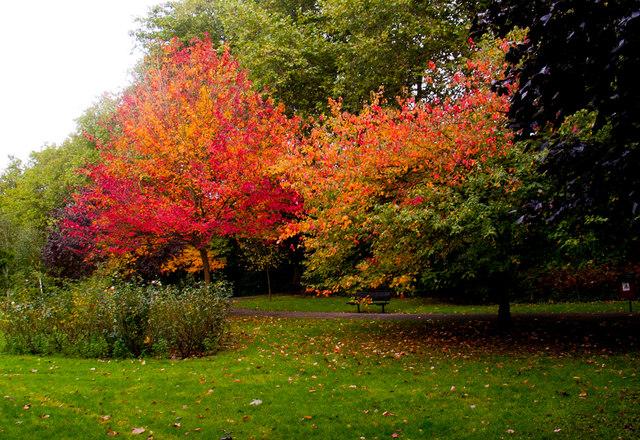 Autumnal scene, Priory Park