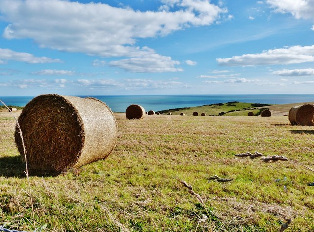 Straw bales in a field, Scabbacombe Head