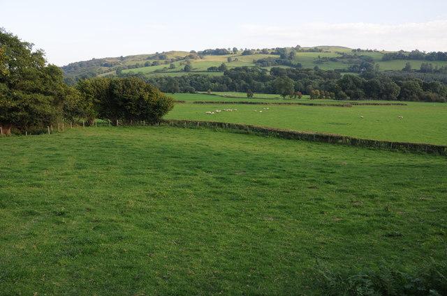 Meadowland near Llanerfyl