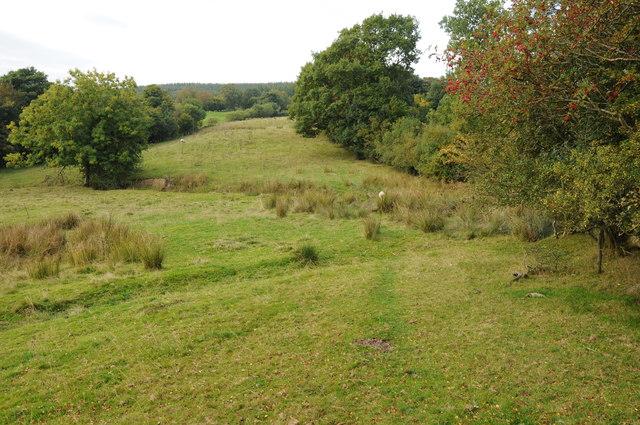 Glyndwr's Way approaching Dyfnant Forest