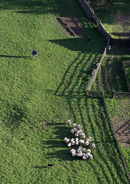Herding sheep at Muchra