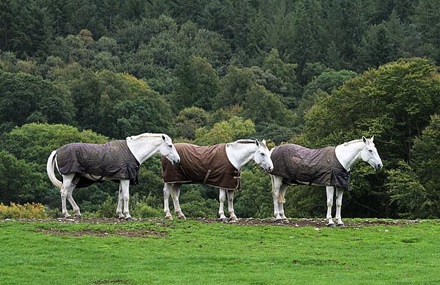 Horses at Netherbarns