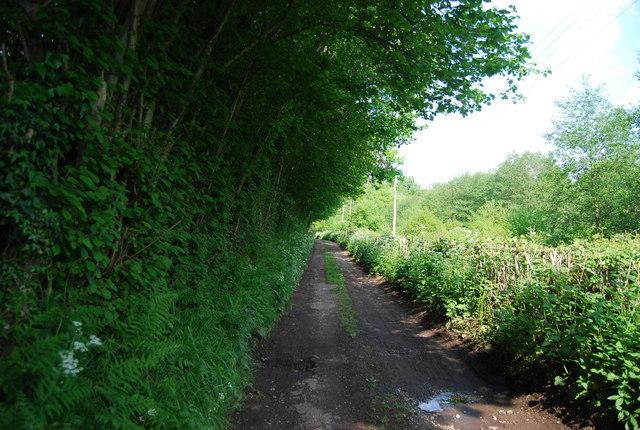 Track to Reynolds Lane