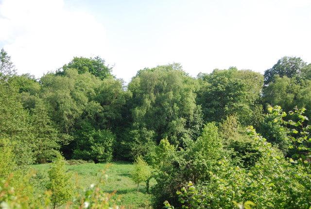 Woodland south of Smockham Farm