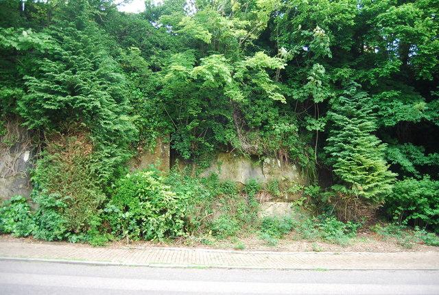 Vegetated cliff