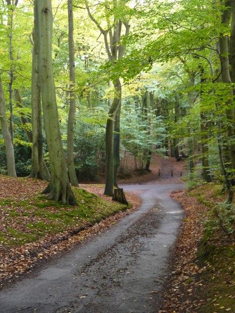Minor roads in Pullingshill Wood