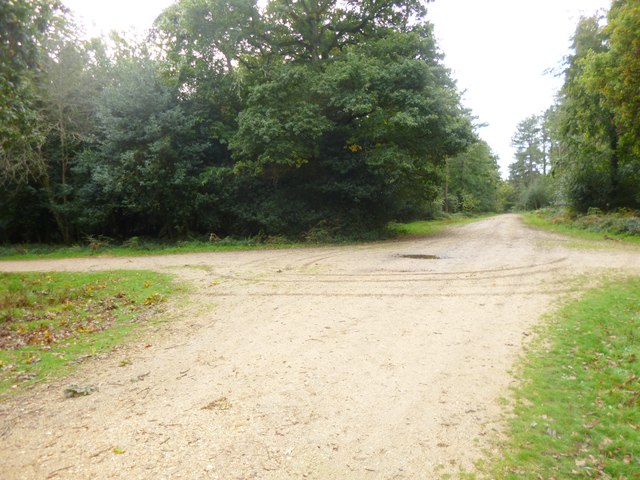 Setthorns, forestry road junction