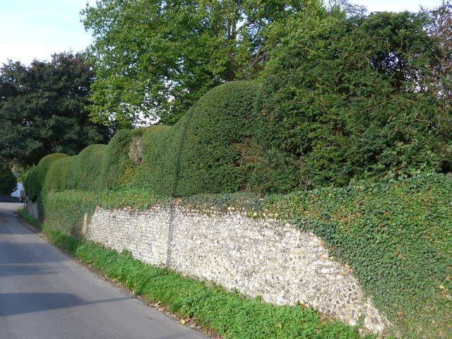 Subtle but distinctive topiary in Station Road