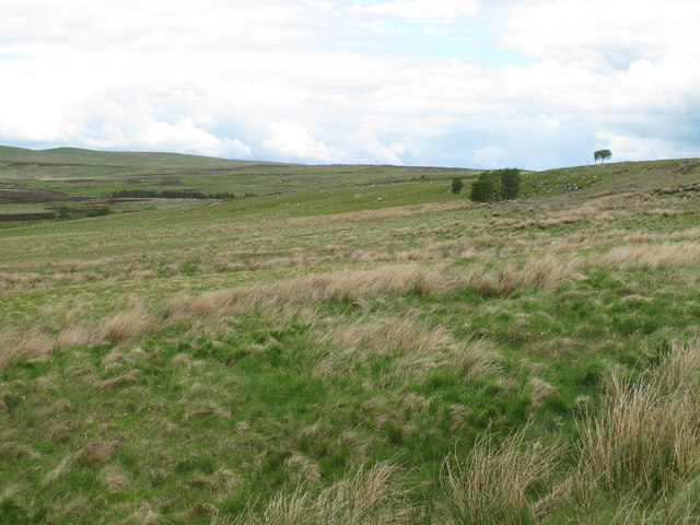 Moorland east of Bellshiel Burn