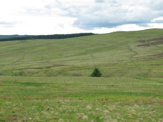 The valley of Bellshiel Burn below High Knowe