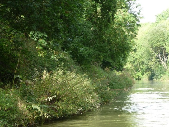 North [non-towpath] bank, Kennet & Avon canal