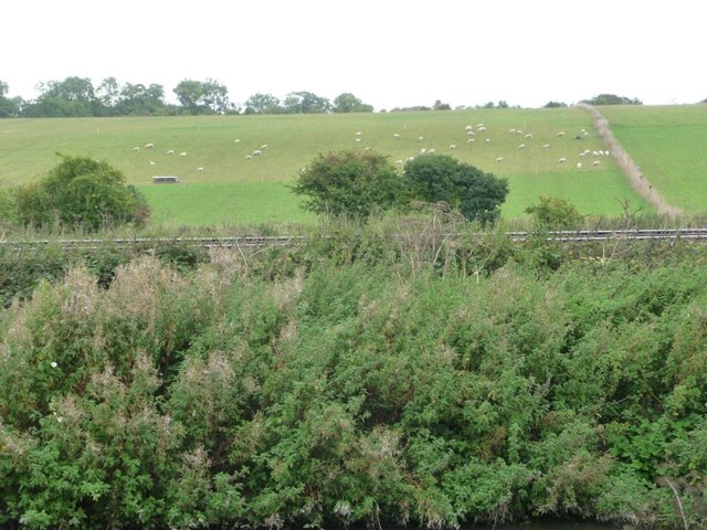 Hillside sheep, west of Crofton