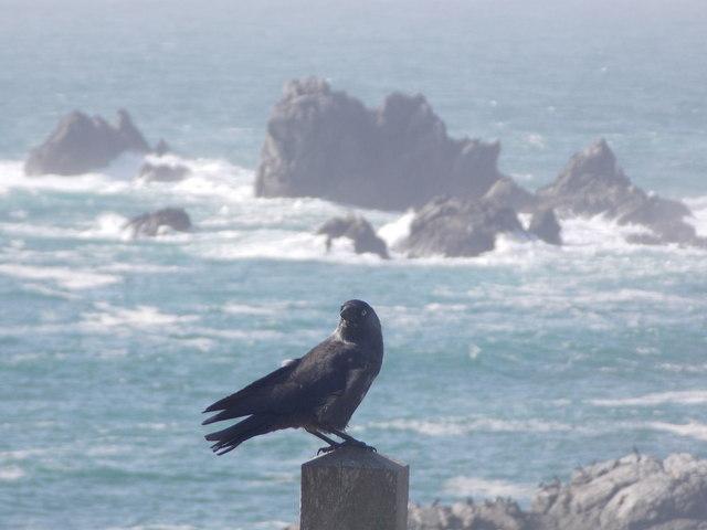 The Lizard: a crow perches