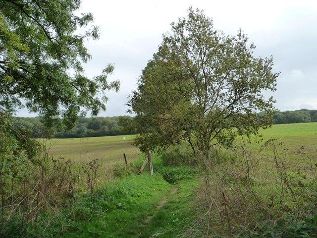 Bridleway to Wilton Brail