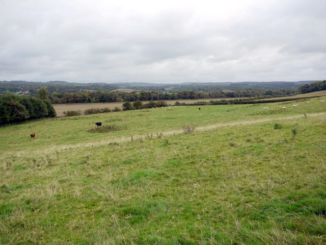 Pasture above Bywell Haughs